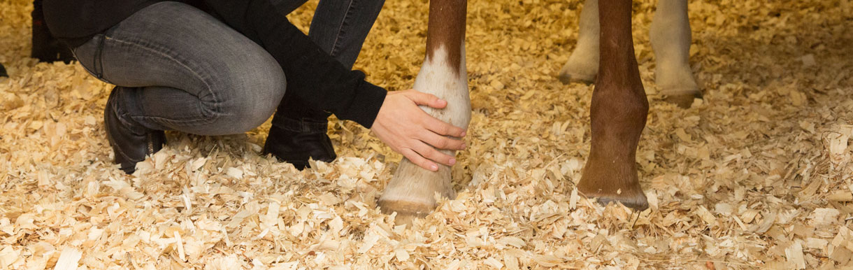 Applying foot poultices